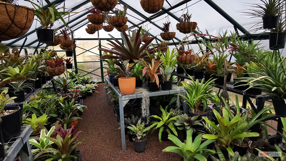 Some magnificent bromeliads